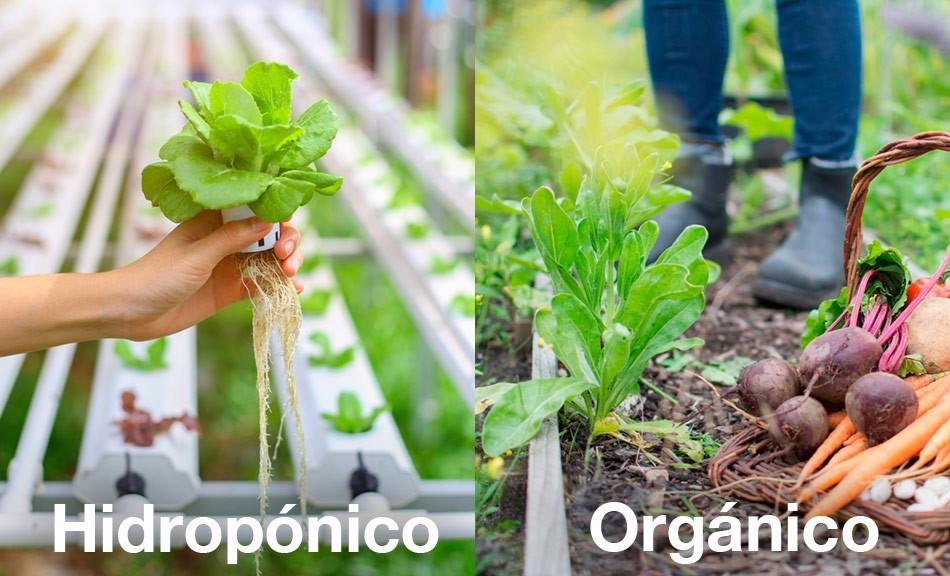 Cultivos Orgánicos vs Hidropónicos